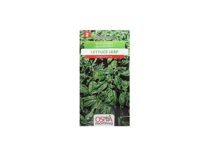 Bazalka pravá - Lettuce Leaf
