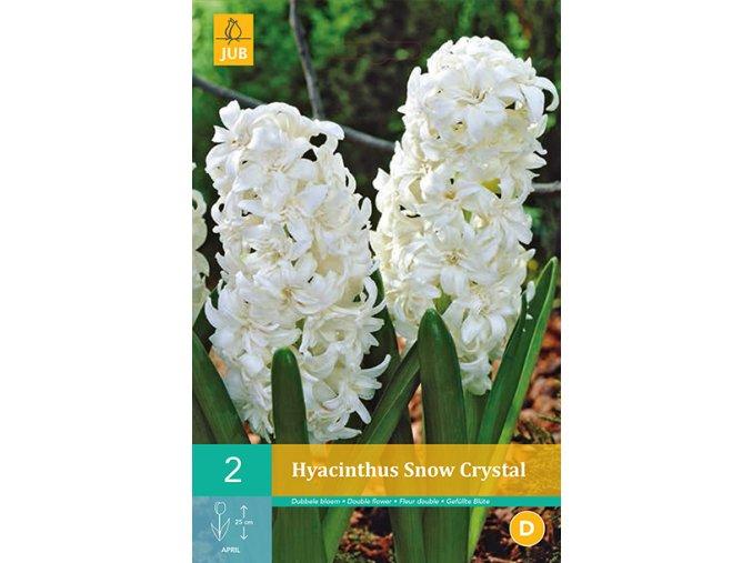 HYACINT - SNOW CRYSTAL