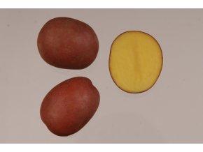 Sadbové brambory - Red Anna