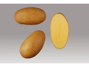 Sadbové brambory - Monika