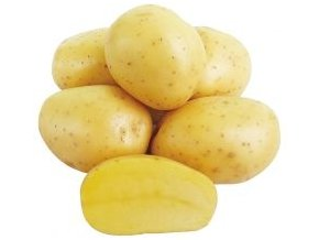 Sadbové brambory - Concordia