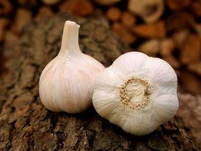 Sadbový česnek - Havel