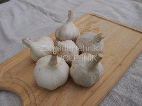 Sadbový česnek - Dukát