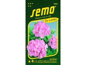 PELARGONIE PÁSKATÁ - růžová 0.05 g