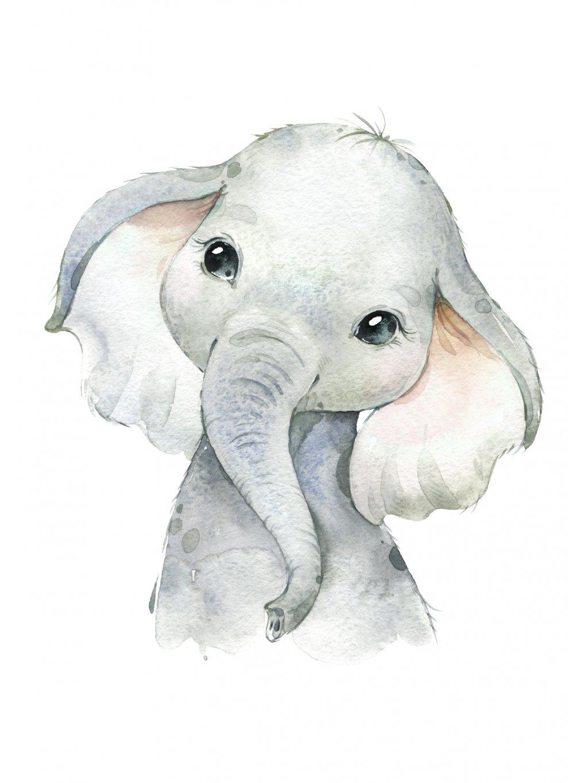 Plakát sloník