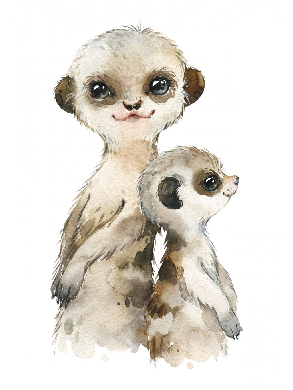 Plakát surikata s mládětem