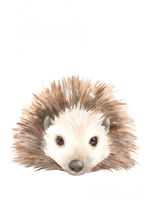 Plakát ježek