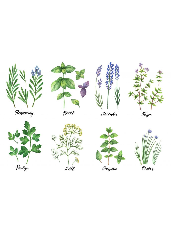 Plakát bylinky v kuchyni
