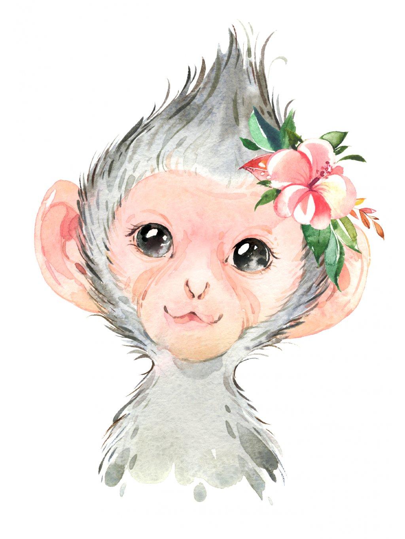 Plakát opička