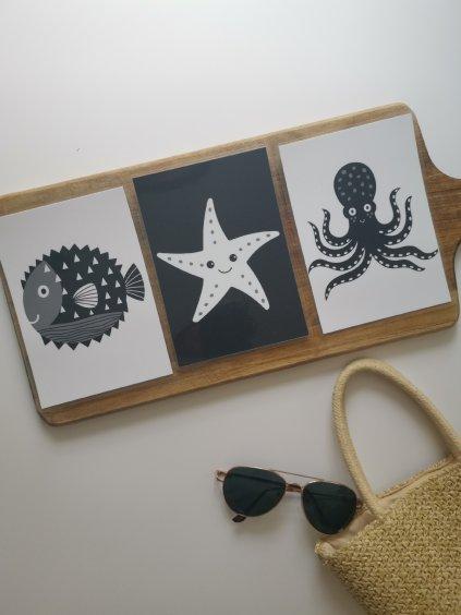 Kontrastní kartičky OCEÁN