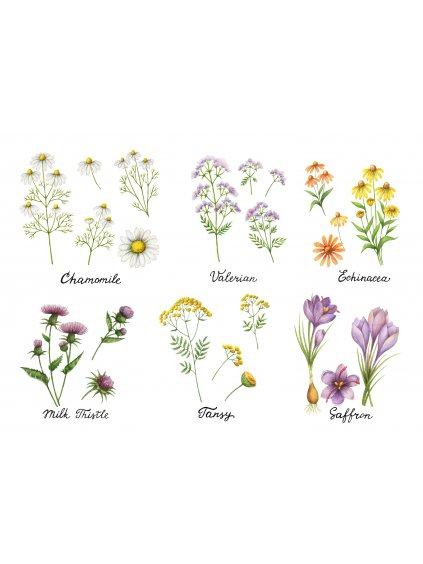 Plakát luční bylinky