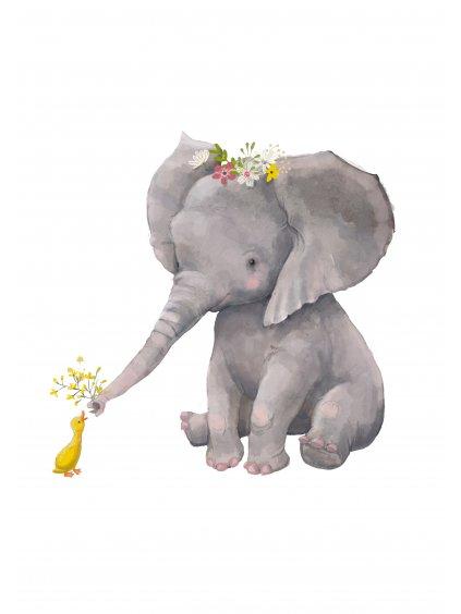 Plakát slon s kačenkou