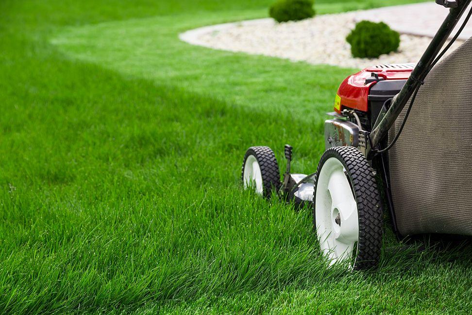 Ako si udržať zdravý zelený trávnik