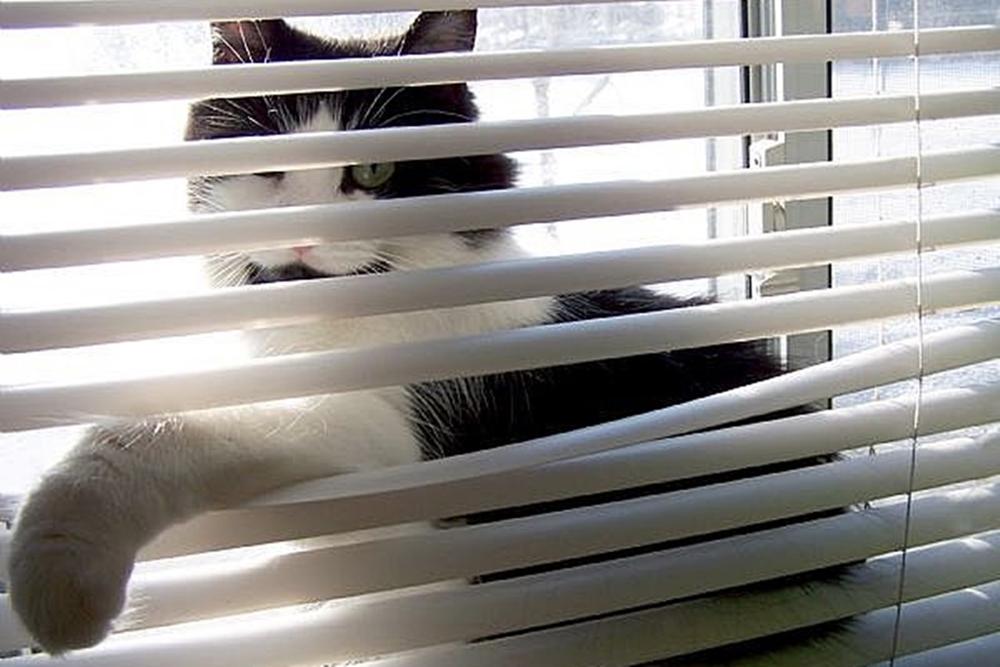 Mačky milujú silóny