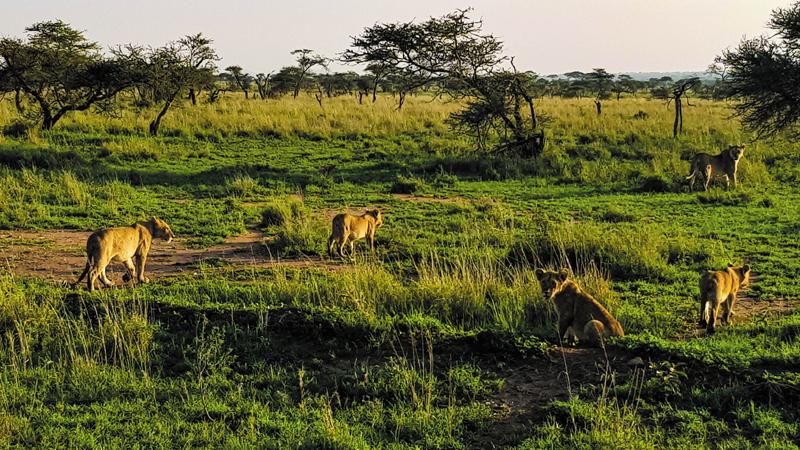 Když za Safari do Tanzanie, tak jedině s Hekima Safaris