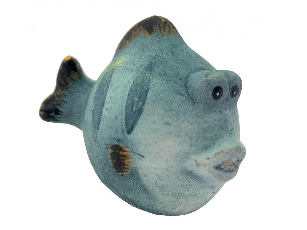 rybák