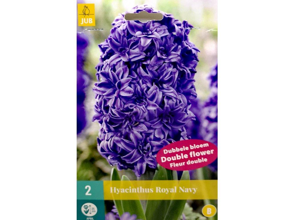 Hyacinthus Royal