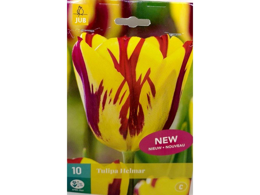 Tulipán Hermar