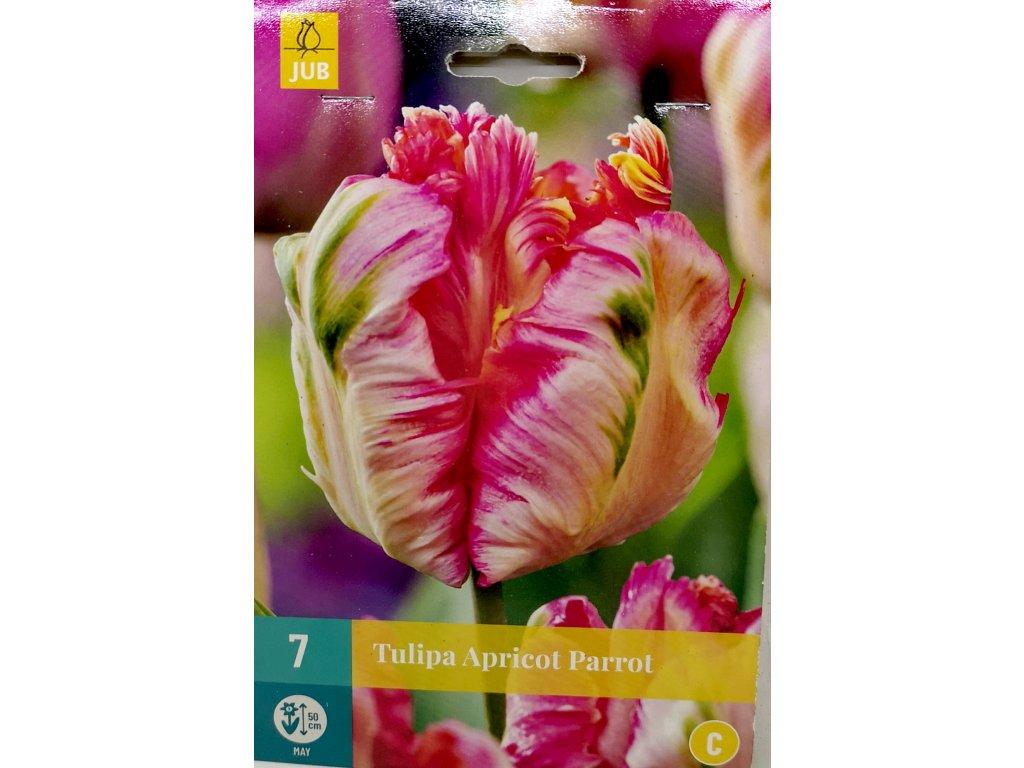 Tulipán Apricot