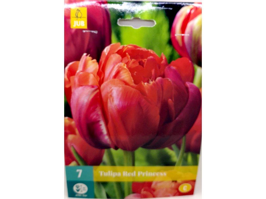 Tulipán red Princ