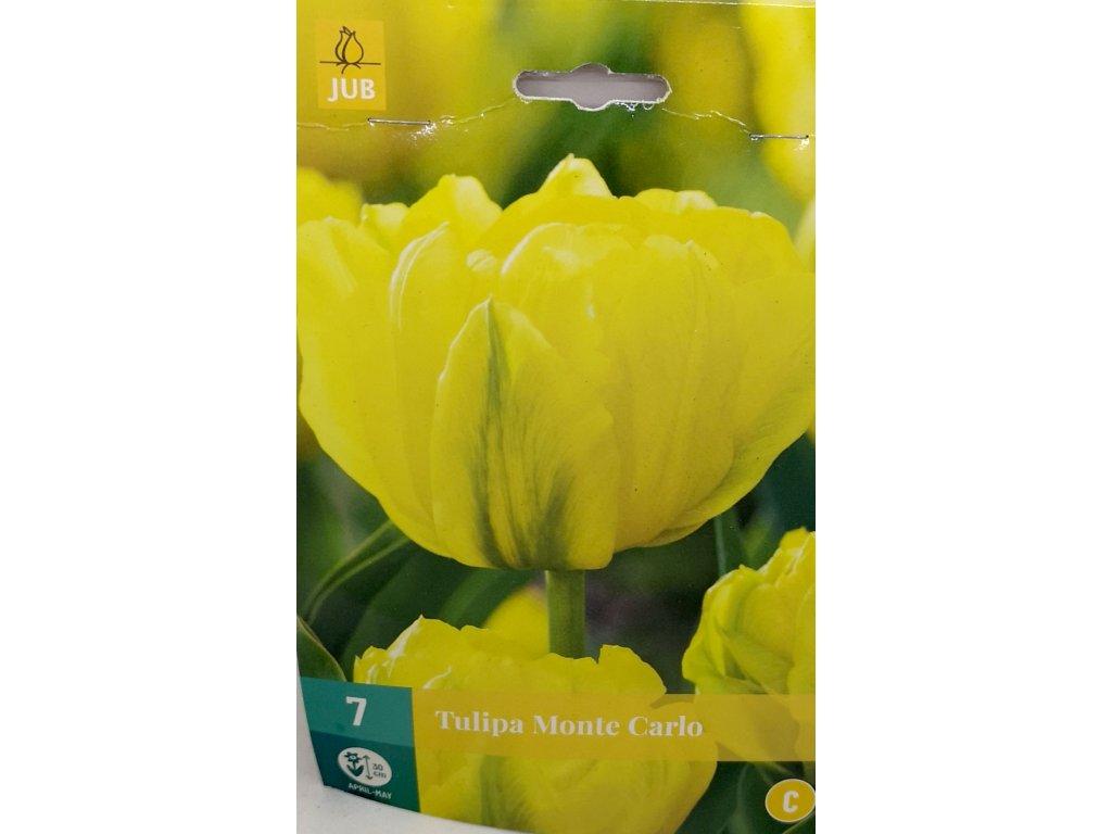 tulipán Monte Carlo