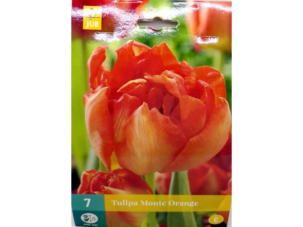 Tulipán Monte Orange