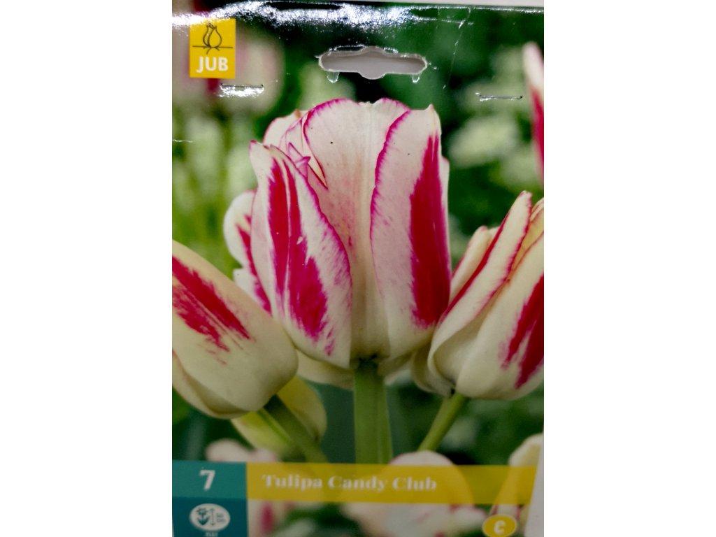 Tulipán Candy