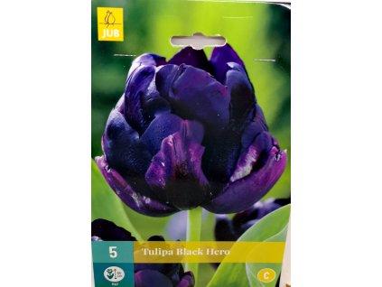 Tulipán Black Hero
