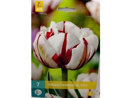 Tulipán Carnaval