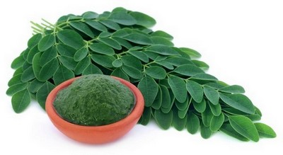 Moringa oleifera - olejodárná