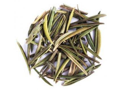 Olivový list