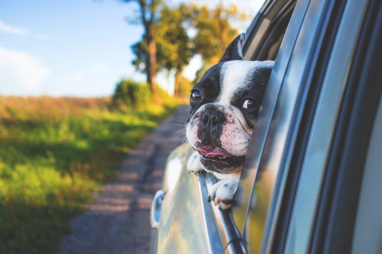 Bezpečné cestování se psem v autě