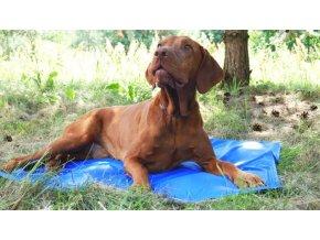 chladici podlozka pro psy a kocky argi 40x50 cm (1)