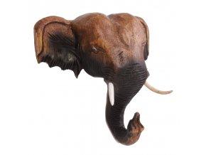 slon hlava