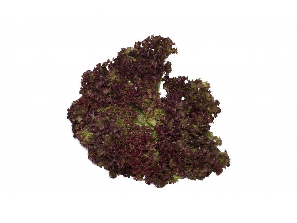Kopie souboru salát lollo roso