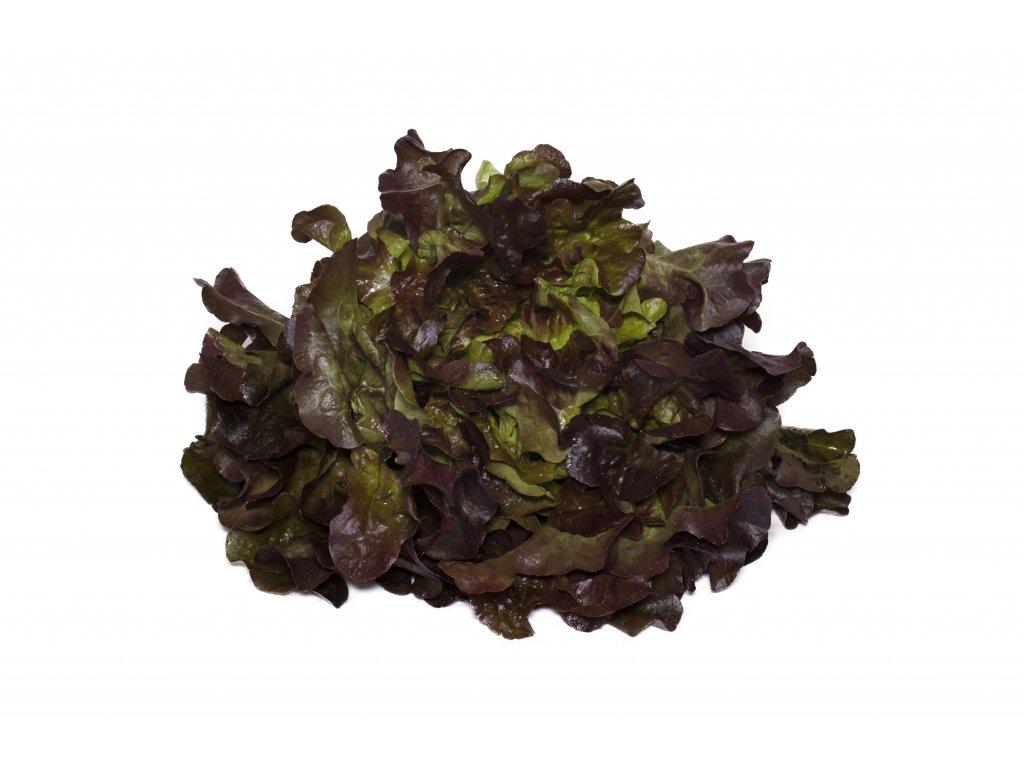 Kopie souboru salat dubovy list