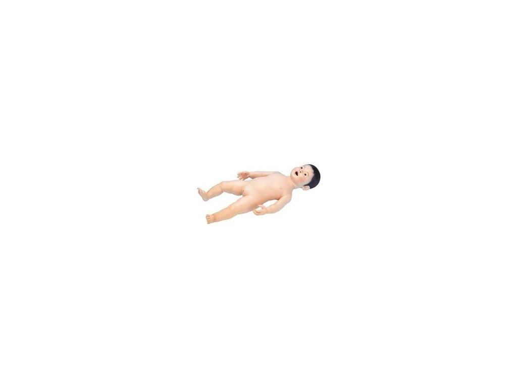 Model kojence