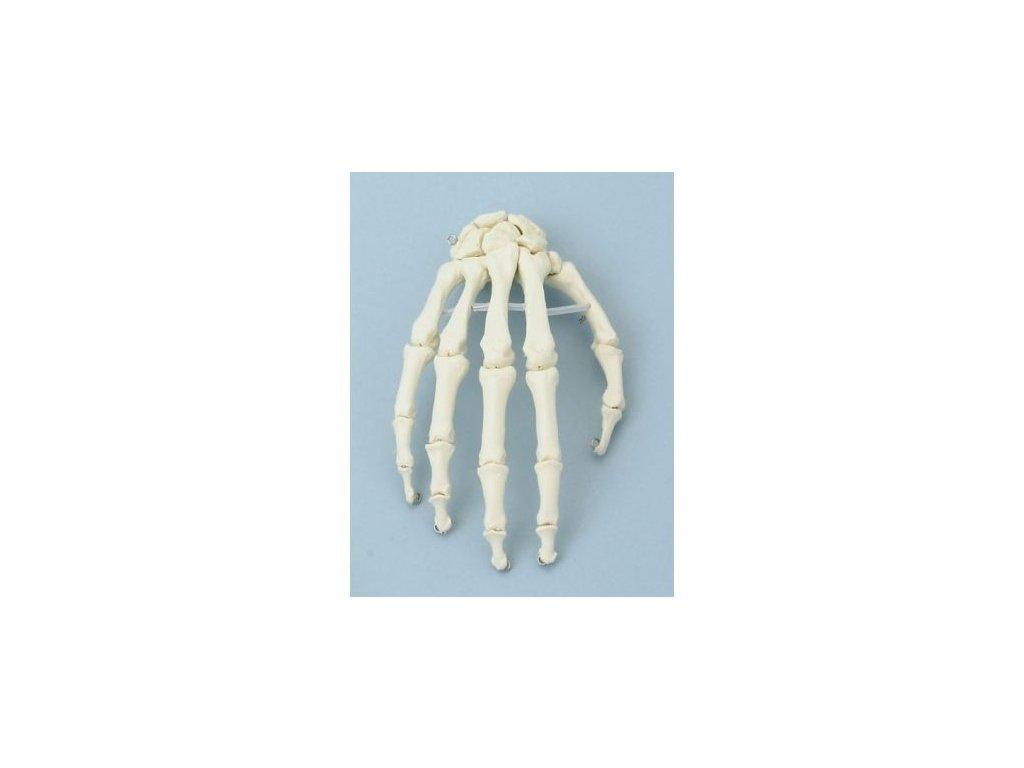 Kostra ruky