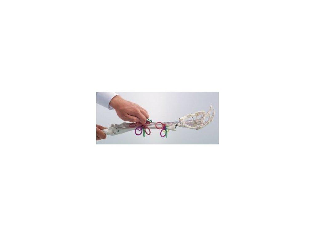 Model mechanického ohýbání prstů