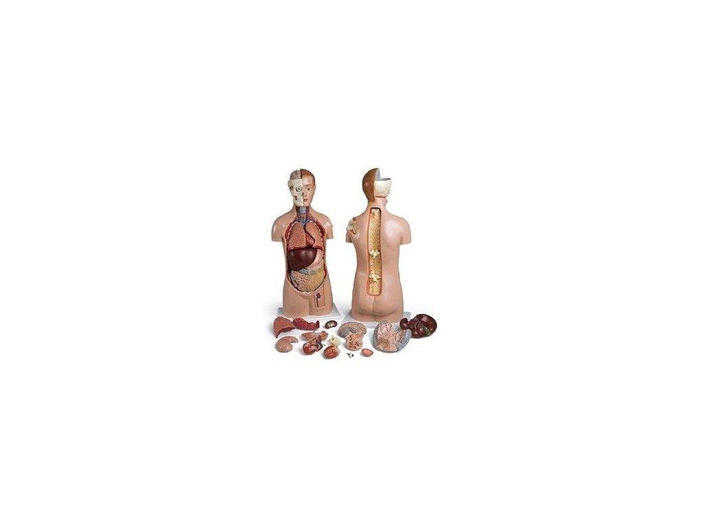 Torso s pevnou hlavou, otevřenými zády a ramenem, unisex, 17 částí
