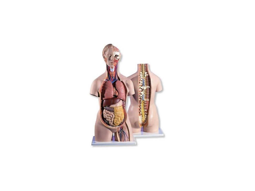 Klasické torso s otevřeným krkem a otevřenými zády, unisex, 18 částí