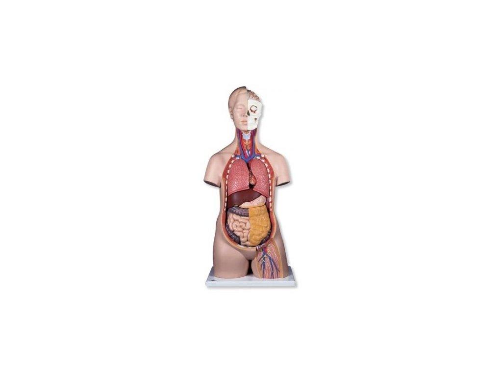 Klasické torso, unisex, 12 částí