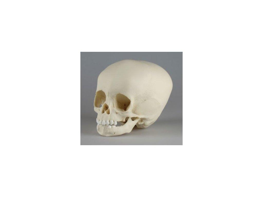 Lebka tříletého dítěte
