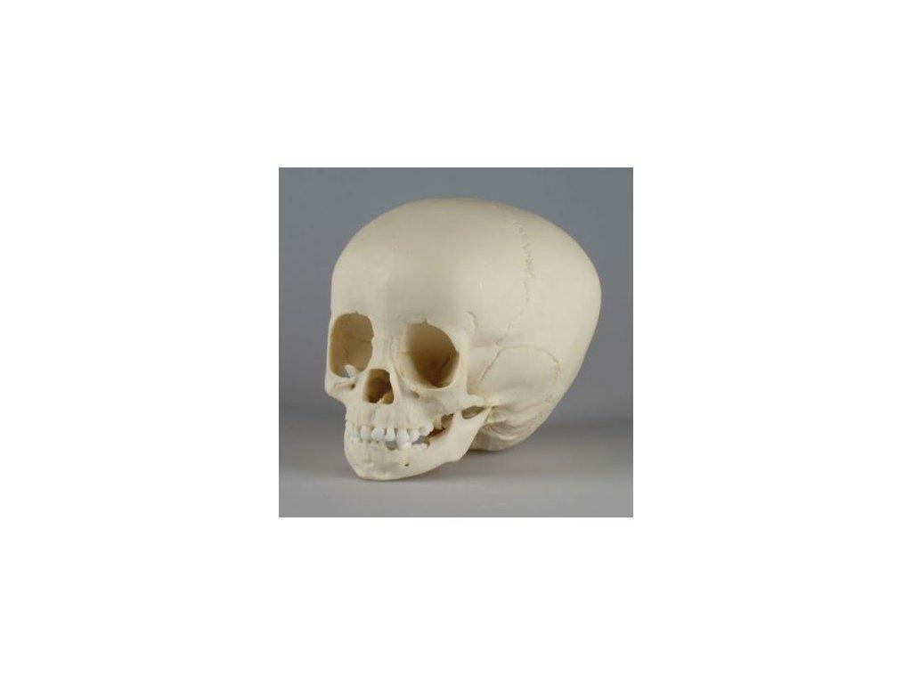 Lebka jeden a půlletého dítěte