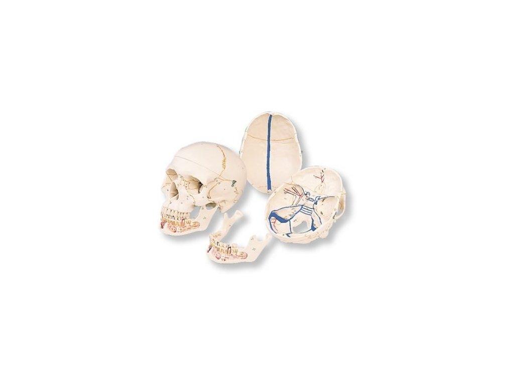 Klasická lebka s otevřenou dolní čelistí, 3 části