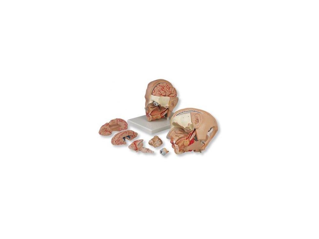 Model hlavy, 6 částí
