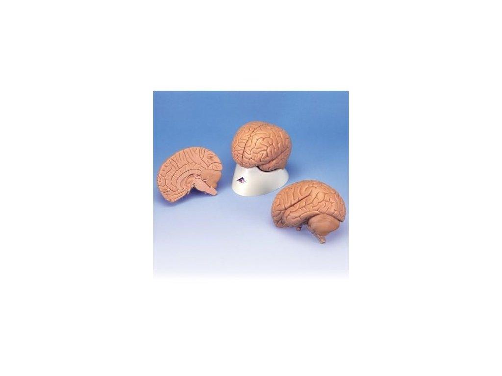 Úvodní model mozku, 2 části