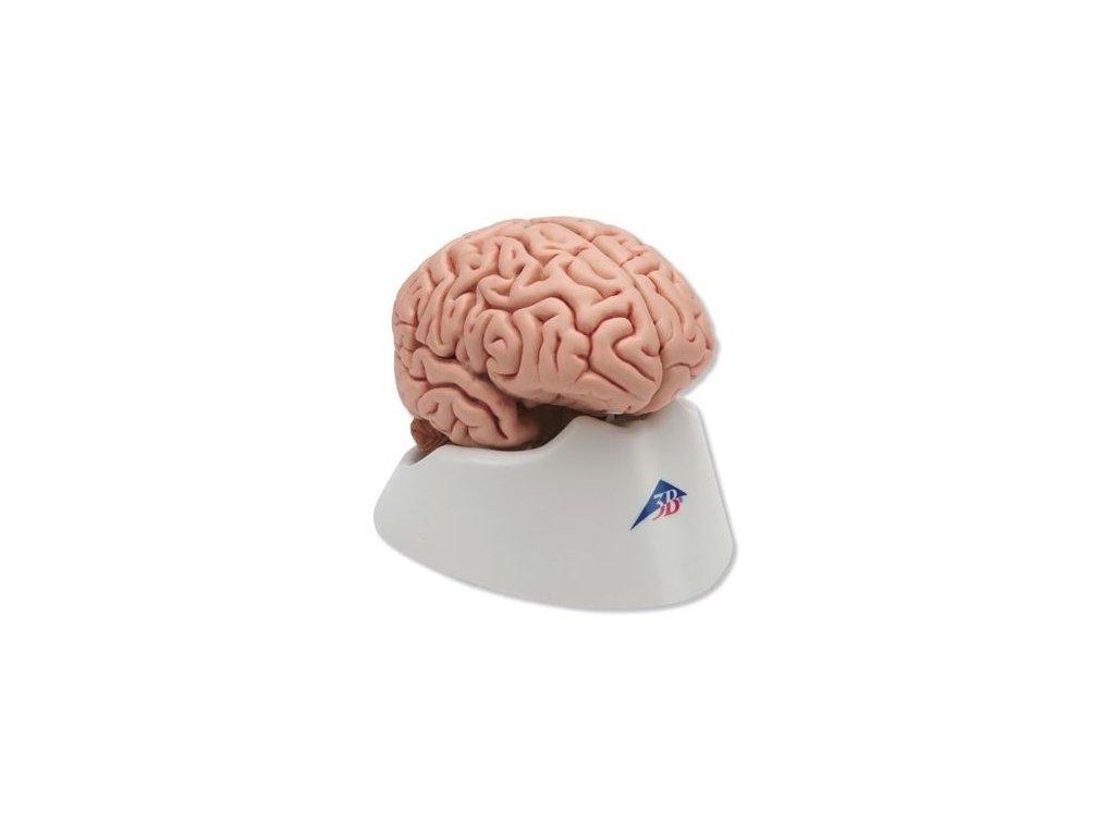 Klasický mozek, 5 částí