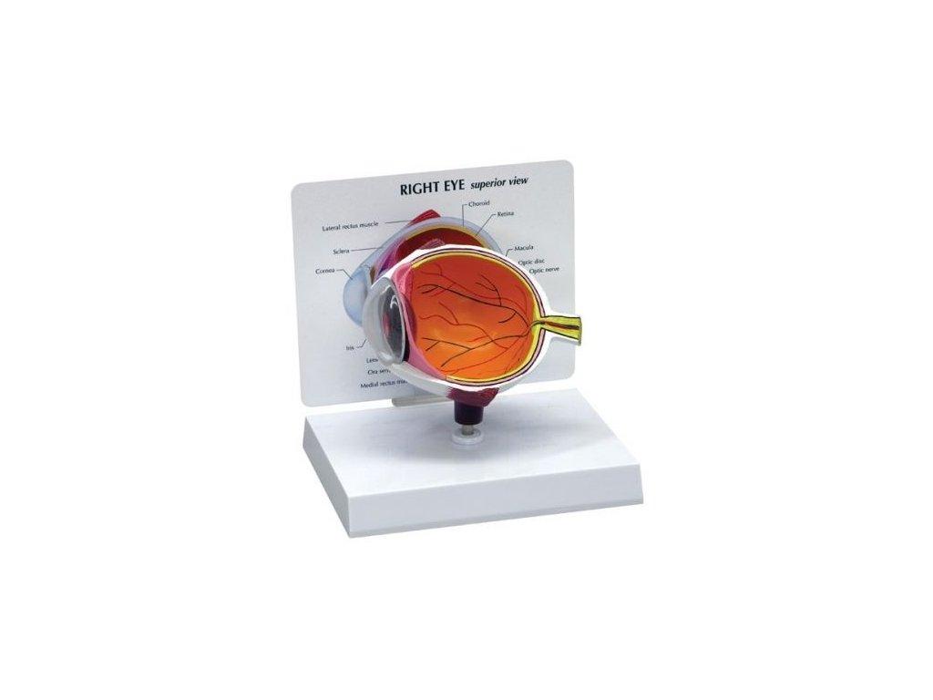Polovina oka