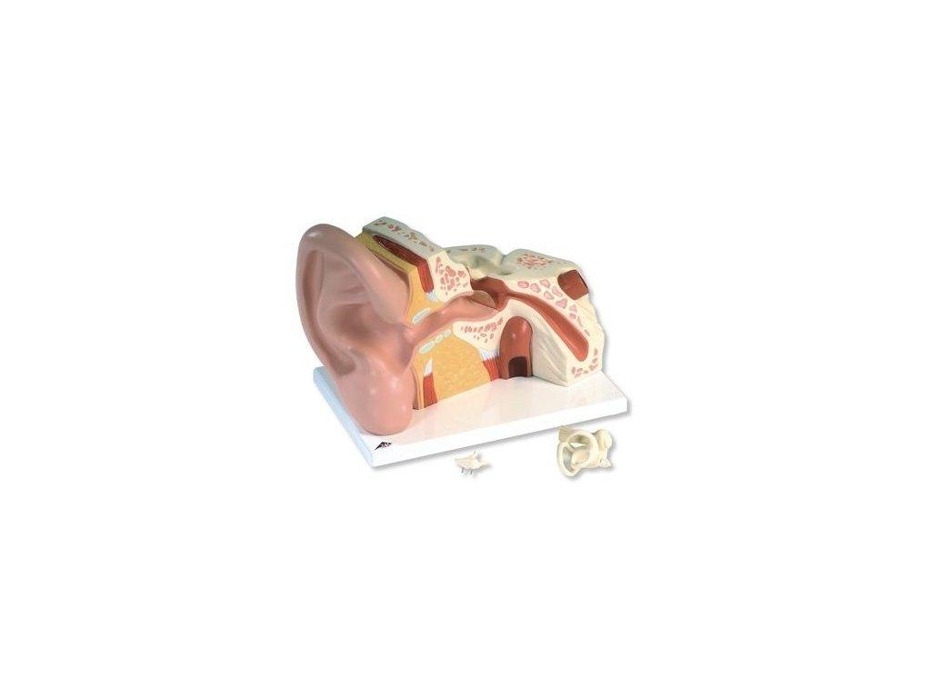 Velký model ucha, 5 krát zvětšený, 3 části